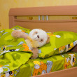 Stock Photo: Toy teddy bear in the bed