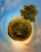 Planet with tree at sunset — Stock Photo