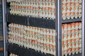 Eggs in factory — Stock Photo