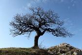 Albero da solo con il sole e il colore del cielo — Foto Stock