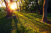 Sunshine in the green forest with many tree — Stock Photo