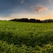Sunset over farm field with lone tree and chapel — Stock Photo