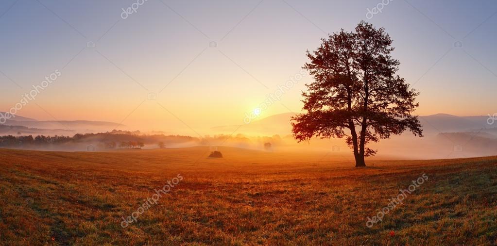 Фотообои Только дерево на лугу на закате с Солнцем и туман - панорама