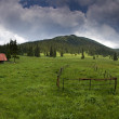 Mountain green meadow — Stock Photo