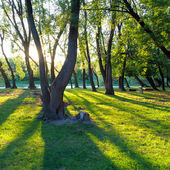 Forest with many tree — Stock Photo