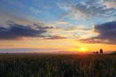 Dramatic sunset on field — Stock Photo