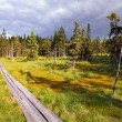 Bog in Krkonose — Stock Photo #23618101