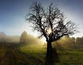 Promienie słońca na łące z drzewa — Zdjęcie stockowe