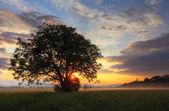Alone tree at dramatic sunset on field — Stock Photo