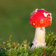 Stock Photo: Red toadstool