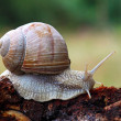 Stock Photo: Snail in nature