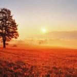 Tree and sun — Stock Photo #25260457