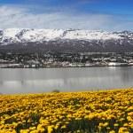 Akureyri city - Iceland — Stock Photo