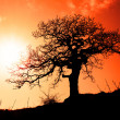 Alone tree with sun and color sky — Stock Photo