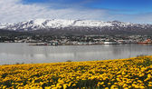 Akureyri city - Iceland — Stock Photo