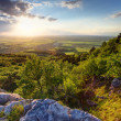 Green forest at sunset - Slovakia — Stock Photo