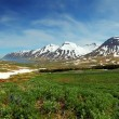 Iceland mountain panorama with flowers — Stock Photo #28614251