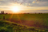 Gree field at sunset — Stock Photo