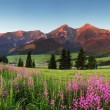 Stock Photo: Beauty mountain panoramwith flowers - Slovakia