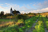 Rows of vines to sunrise with church in background — Stock Photo