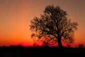 Alone tree with sun and color red orange yellow sky — Stock Photo