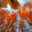Sky with clouds and sunshine through the autumn tree — Stock Photo