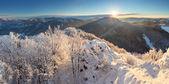 Träd täckt med rimfrost och snö i fjällen — Stockfoto