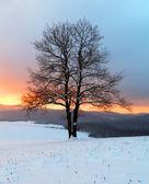 Alone tree in winter sunrise landscape — Stock Photo