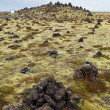 Icelandic moss covers volcanic rock — 图库照片