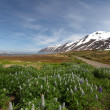 Iceland mountain panorama with flowers — Stock Photo