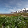 Foto Stock: Iceland mountain panoramwith flowers