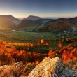 Stock Photo: Autumn panoramwith sun and forest, Slovakia