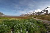 Panorama de montanha islândia com flores — Fotografia Stock