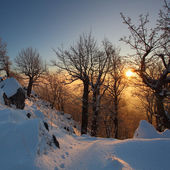 Beautiful winter sunset with trees in the snow — Stockfoto