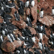 Stock Photo: Birds colony