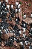 Birds colony — Stock Photo