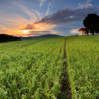 Farm field with lone tree and chapel — Stock Photo