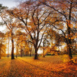 Autumn panorama in park — Stock Photo