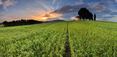 Farm field with lone tree and chapel — Stockfoto