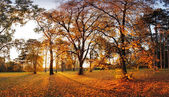 Autumn panorama in park — Stock Photo