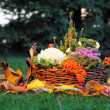 Still life in nature with basket — Stock Photo