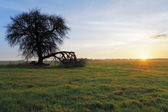 Drzewo i słońce — Zdjęcie stockowe