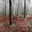Forest winter 360 degrees panorama — Stock Photo #38699873