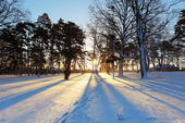 Winter tree with sun rays — Stock Photo
