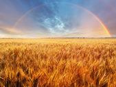 Meadow landscape — Stock Photo