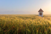 Mist on wheat field with chapel in Slovakia Tatras — Stock Photo