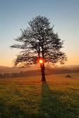 Tree and sun — Stock Photo