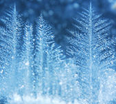 Ice forest — Stock Photo