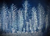 Ice forest — ストック写真