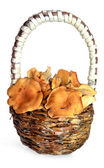 Mushrooms in the weaved basket — Stock Photo